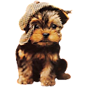 Puppy Widget logo