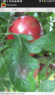Purdue Tomato Doctor- screenshot thumbnail