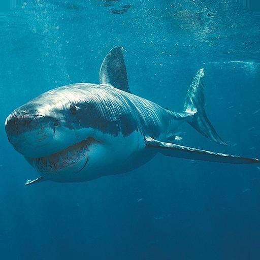鯊魚高清壁紙 LOGO-APP點子