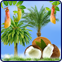 Tropic HD Live Wallpaper icon