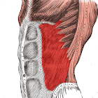 Anatomy: Atlas of Muscles icon
