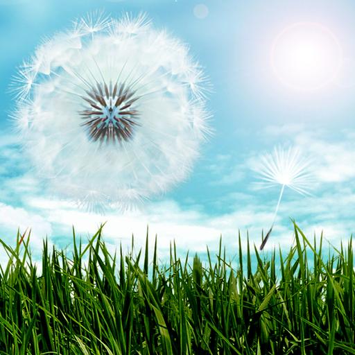 Blue Sky Dandelion HD LOGO-APP點子