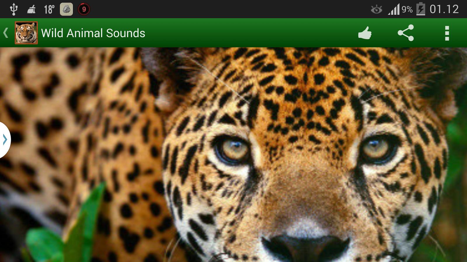 Wildlife Sounds - screenshot