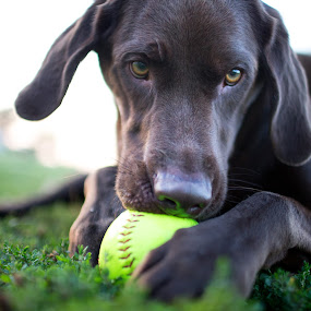 Have a Ball by Peter M  - Animals - Dogs Playing
