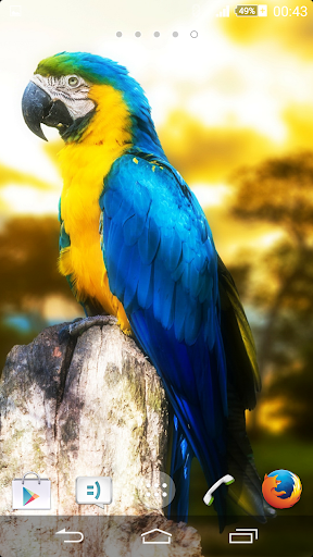 eXPERIAnce THEME - Macaw