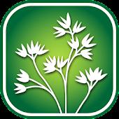 1950 Montana Wildflowers