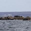 Various East Coast Seals