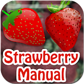 Strawberry Manual