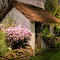 PHL-FlowerShow2015-259.jpg