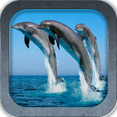 Beautiful Dolphins HD