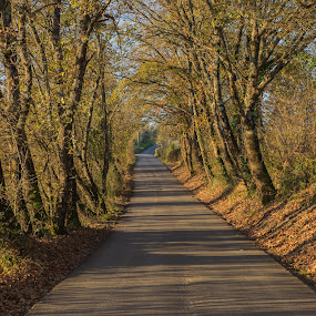 Autumn by Ricky Papex - Landscapes Travel ( chianti, florence, autumn, street, path, italy,  )