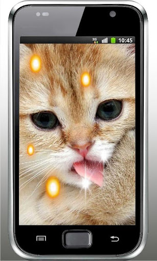 Pet Kitty HD Live Wallpaper