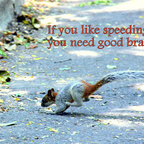 Speeding by Leong Jeam Wong - Typography Captioned Photos ( braking, stopping, running, squirrel, brake )