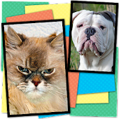 Cats Vs Dogs Action Memory