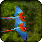 Parrots wallpapers icon