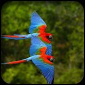 Parrots Wallpapers