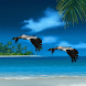 Birds Fly Live Wallpaper