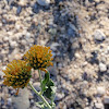 Flower/weed