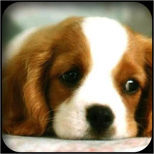 犬壁紙 個人化 LOGO-阿達玩APP