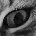 Roxy The Cat