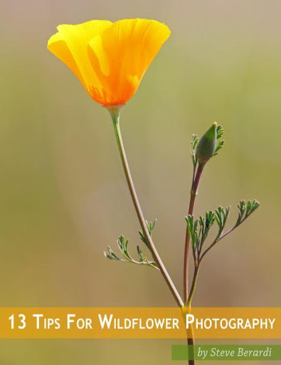 Tips For Wildflower Photo