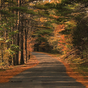 Autumn Days by Liz Crono - Landscapes Forests