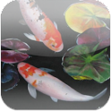 3D Koi Pond Reality Live Wallp