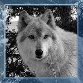 Wolf Games HD live wallpaper