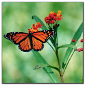 Butterfly jigsaw puzzle game APK