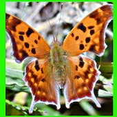 الفراشة الجميلة اللغز! لعبة