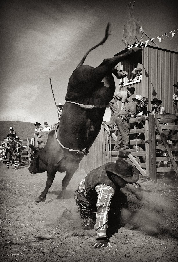 Get out of the Way! by Julien Johnston - Sports & Fitness Rodeo/Bull Riding ( cowboy, rodeo, bull )