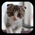 Scottish Fold Cat LWP icon