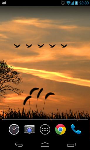 夕阳唯美动态壁纸