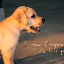 A true friend by Jitaditya Ghosh - Typography Captioned Photos