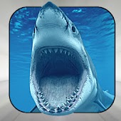 The Complete Sharks Bible
