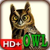Audubon's OWLS HD+ Wallpaper