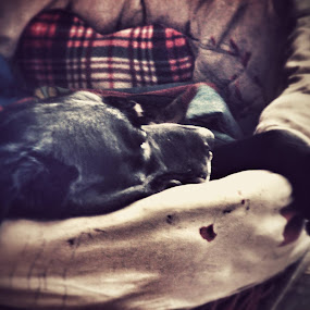 I liked the Rest in my Bed by Nat Bolfan-Stosic - Animals - Dogs Portraits ( enjoj, bad, rest, labrador, black )