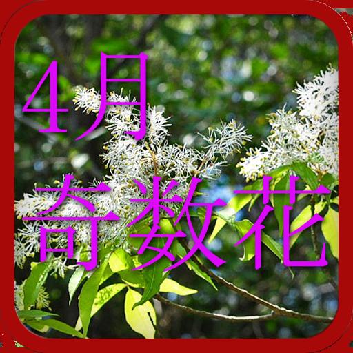 4月奇数日の誕生花 娛樂 LOGO-玩APPs