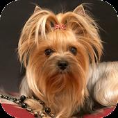 Дрессировка собак и собачек))