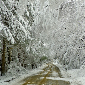 Winters Warning  by Monroe Phillips - City,  Street & Park  Vistas (  )