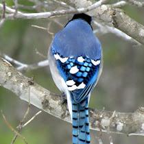 Backyard Bird Butts of the Southeast US