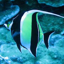 Underwater Hawai'i