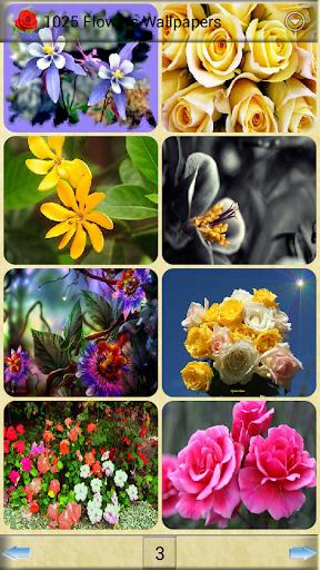 1025花卉壁紙