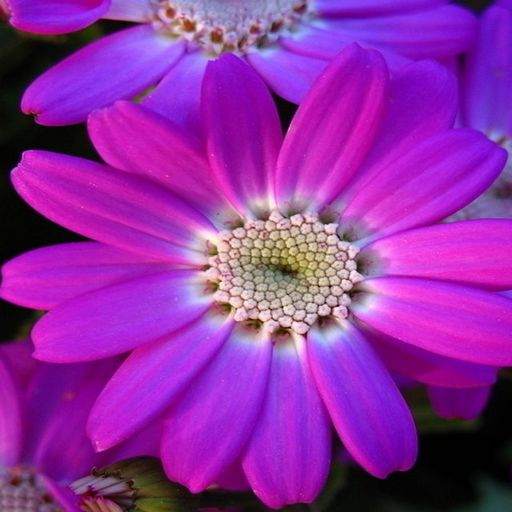 Sweet Flowers IQ Games