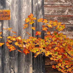 Weathered by Liz Crono - Buildings & Architecture Other Exteriors ( sign, wood, barn, autumn, leaves, weathered, fall, color, colorful, nature )
