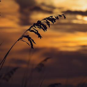 beach sunset by Beth Ann - Landscapes Sunsets & Sunrises ( sunset, beach )