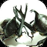 Game Beetle Wars APK for Windows Phone