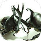 甲虫大战 icon