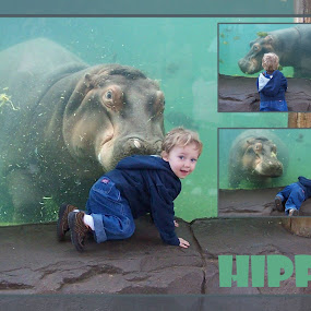 K and the Hippo by Shannon Maltbie-Davis - Typography Captioned Photos ( water, hippo, zoo, smile, toddler,  )