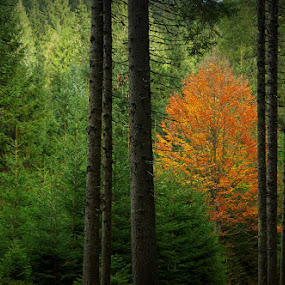 Alone again by Donat Piber - Landscapes Forests ( forest )